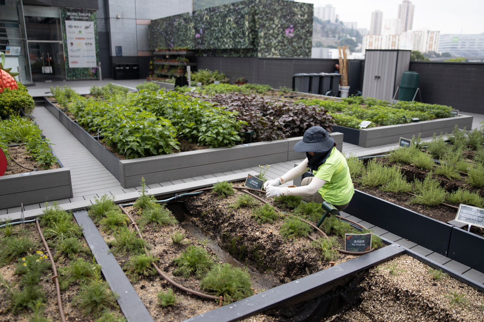 Rooftop Farm at Metroplaza Shopping Mall
