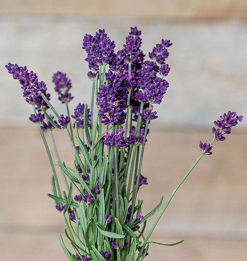 HR_Lavender-Deep-Purple-0X7A5758_1024x10