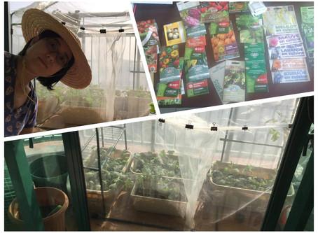 Featured Urban Gardener: Rebecca Hui