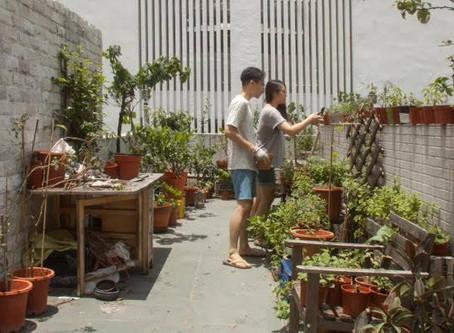 Featured Urban Gardener: Kana Li & Kallen Yan!