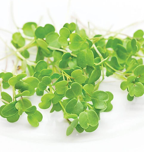 Microgreen-Arugula-Seeds-MG449-1_1024x10
