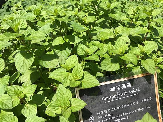 Grapefruit Mint2.JPG
