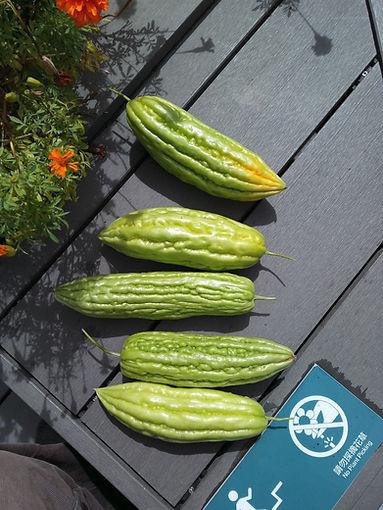 bitter gourd3.jpg