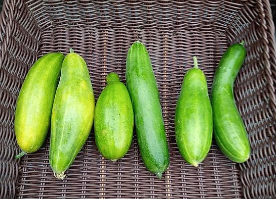 Cucumber_edited.jpg