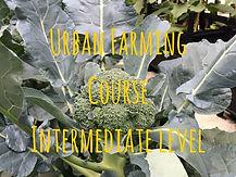 Urban Farming CourseIntermediate (5).jpg
