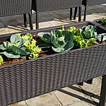 Grow Kit D_Rattan Planter.jpg