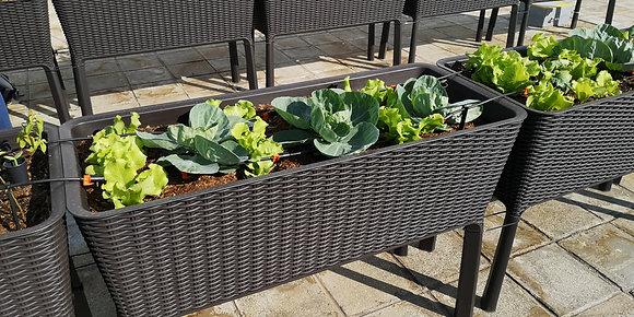 Grow Kit D - Rattan Planter|種植套裝D- 藤籃種植箱