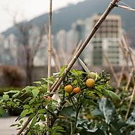 LMO x Rooftop Republic - Rooftop Garden.