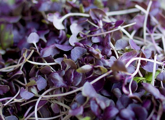 products-Purple-Mircrogreens.jpg
