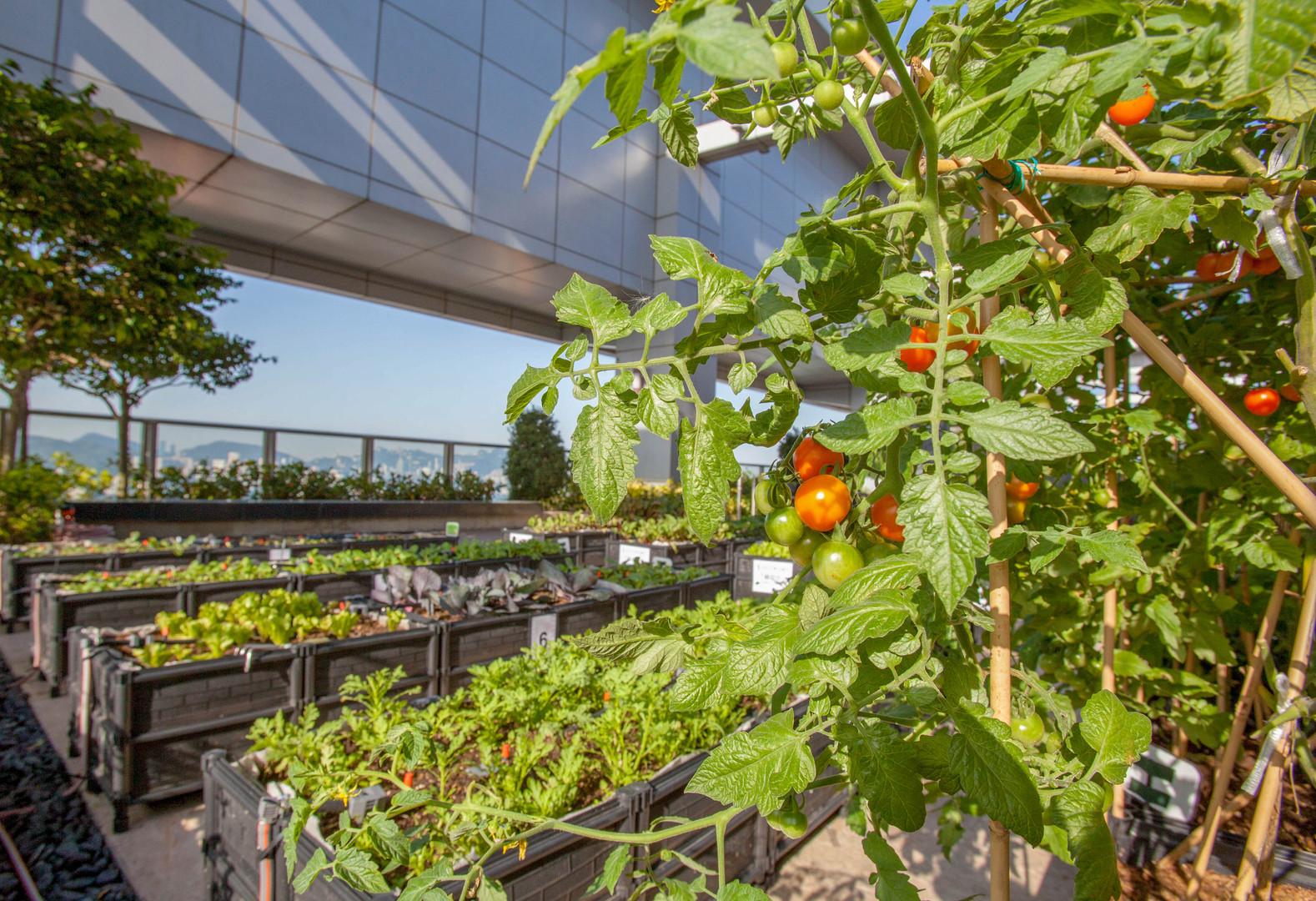 Rooftop Republic Urban Farm in Kwun Tong