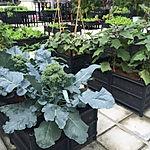 Double Planters.JPG