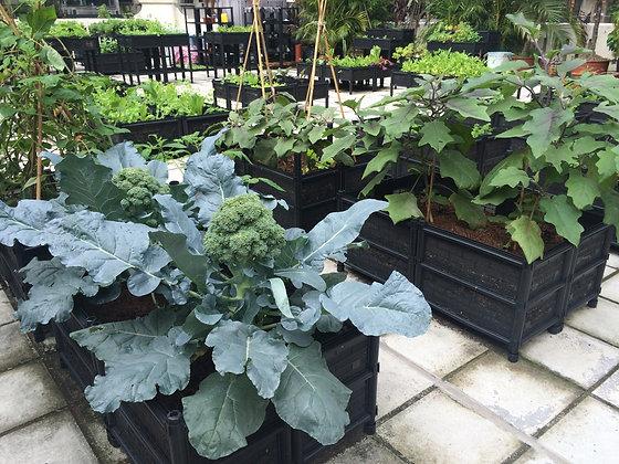 Grow Kit A - Ground Garden Bed|種植套裝A- 座地式種植箱