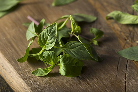Thai-basil-vs-holy-basil.jpg