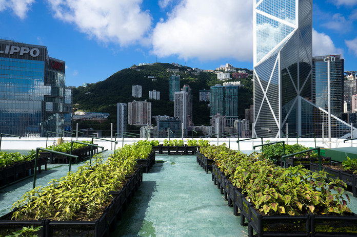 Rooftop Farm at JLL-managed building in
