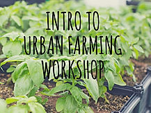 Introduction to Urban Farming - Website