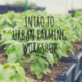 Intro to Urban Farming HK