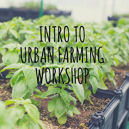 Intro to Urban Farming HK