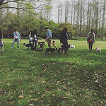 噛む・吠える・引っ張る・歩かない・懐かない・触れない・飛びかかる どんな犬でもおまかせください。出張地域 東京.埼玉.栃木.神奈川.茨城.関東 犬のしつけトレーナー