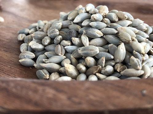 Spiti Barley Grains