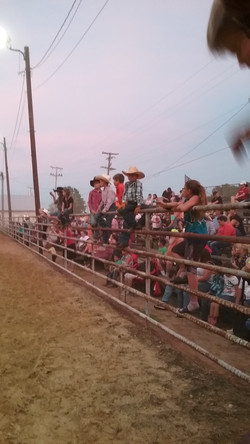 p. 24 - Cowboys on fence