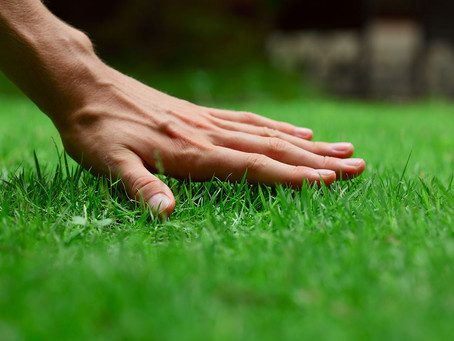 Our Lawn Care Commitment To You