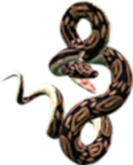 snake_PNG4081.png
