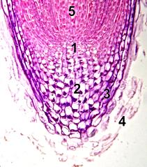 Neurocellin