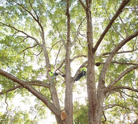 Climbing to care for trees is just one aspect of arboriculture. Careful training is necessary to safely climb.