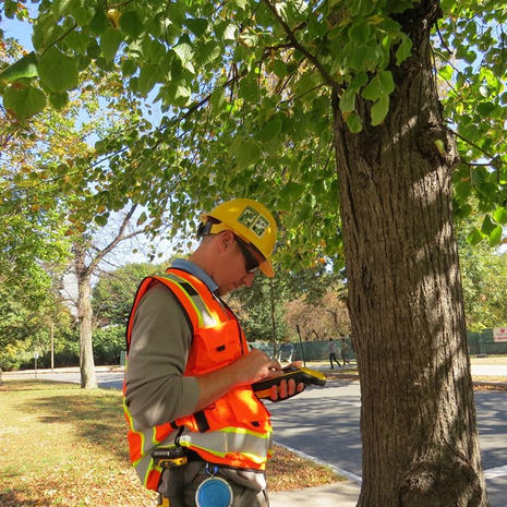 Bartlett Consulting focuses on tree inventories and management plans as seen here in Boston's Emerald Necklace park.