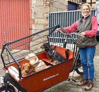 Lasten-EBike mit Hundeaufsatz, auch für mehrere Hunde
