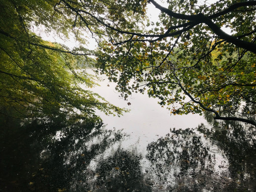 Der Spießbachweiher: Still liegt der See