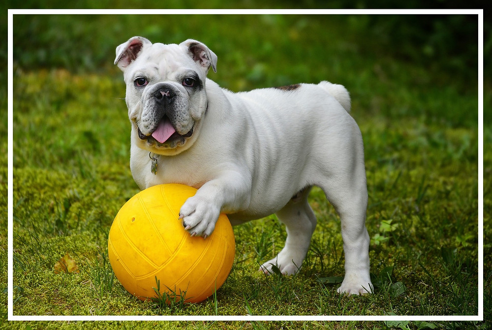Hilfsmittel im Hundetraining