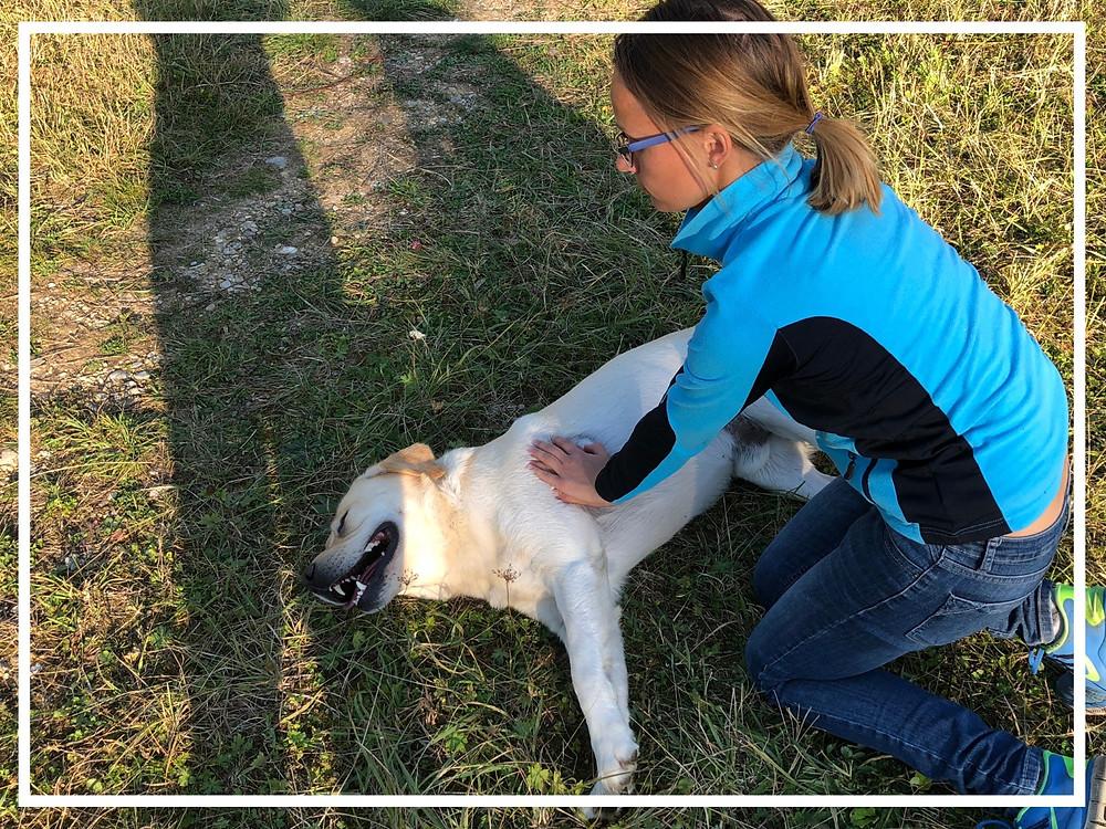 Herzdruckmassage am Hund