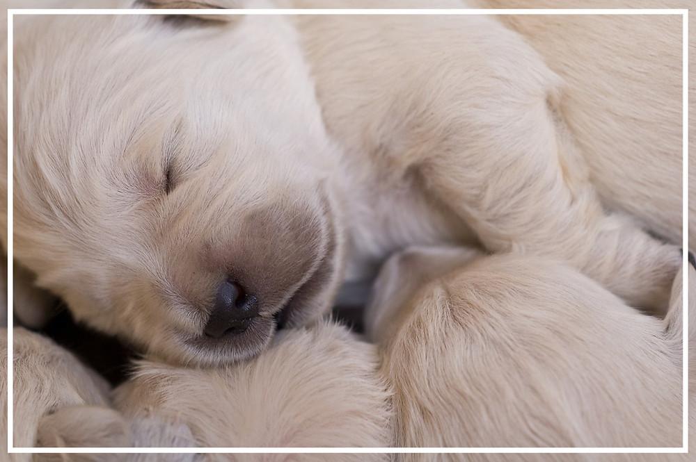 vom neugeborenen Welpen zum erwachsenen Hund II