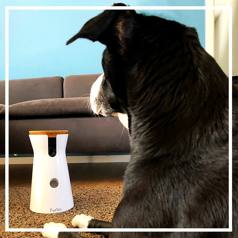 Furbo Hundekamera - Produkttest von Julie & Bonnie VII