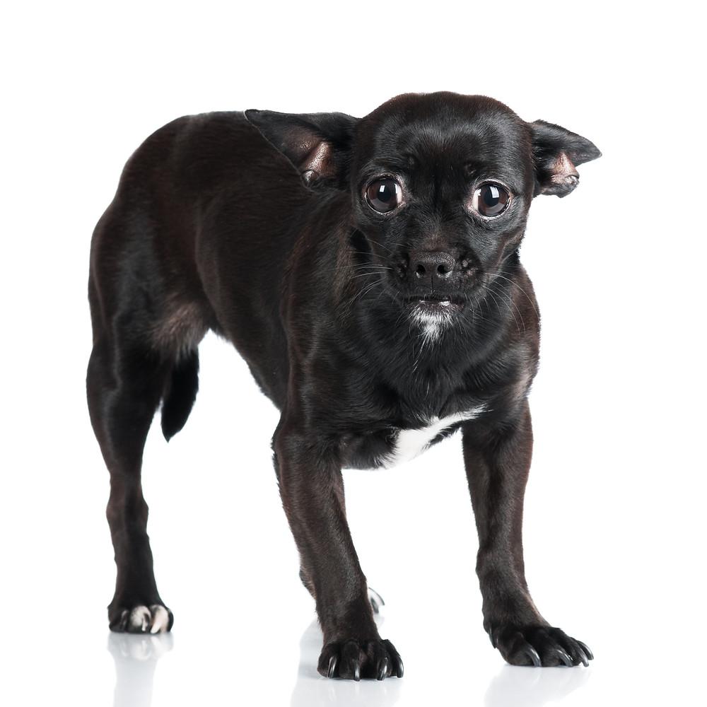 Körpersprache der Hunde XI