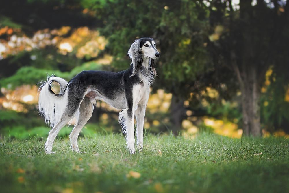 Körpersprache der Hunde VI