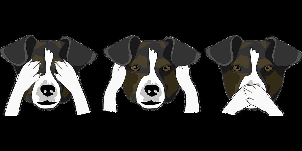 Wie nehmen Hunde ihre Umwelt wahr?