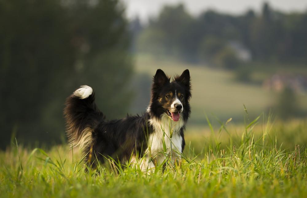 Körpersprache der Hunde IX