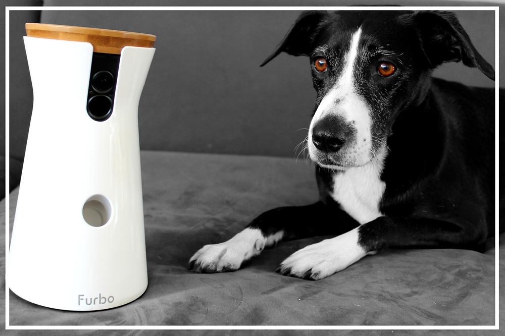 Furbo Hundekamera - Produkttest von Julie & Bonnie II