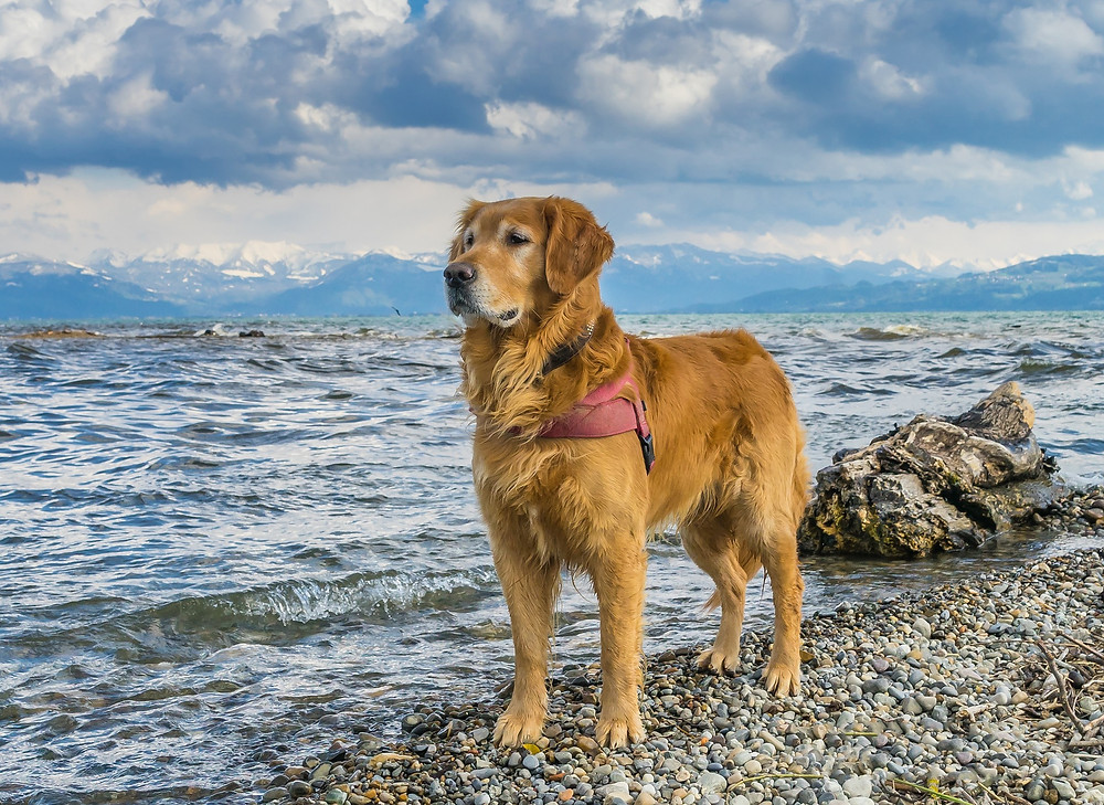 Körpersprache der Hunde VIII