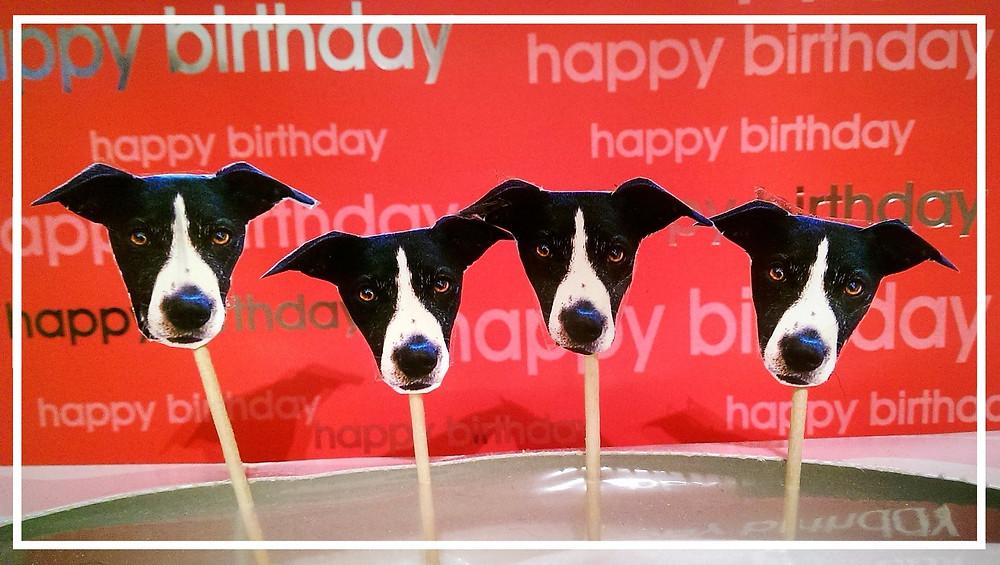 Hundegeburtstag IV