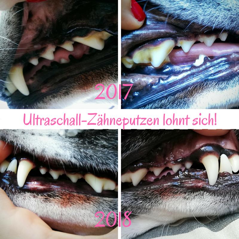 Zahnpflege: Zahnstein beim Hund (Bonnie)