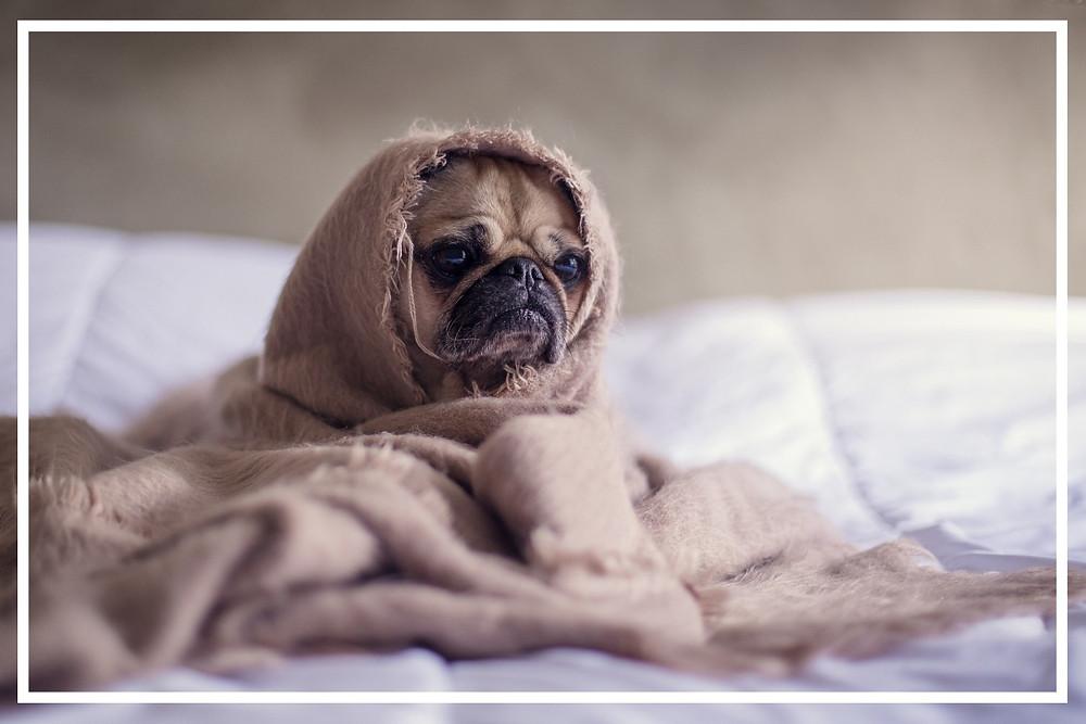Verdacht einer Schilddrüsenunterfunktion bei Hunden