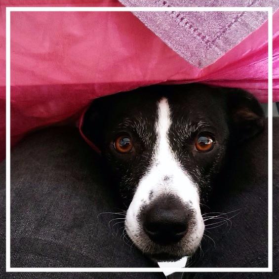 Hundegeburtstag VIII