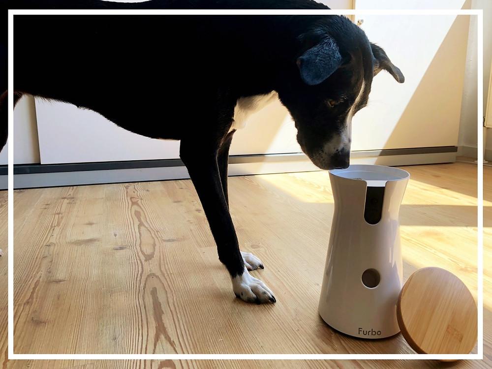 Furbo Hundekamera - Produkttest von Julie & Bonnie III
