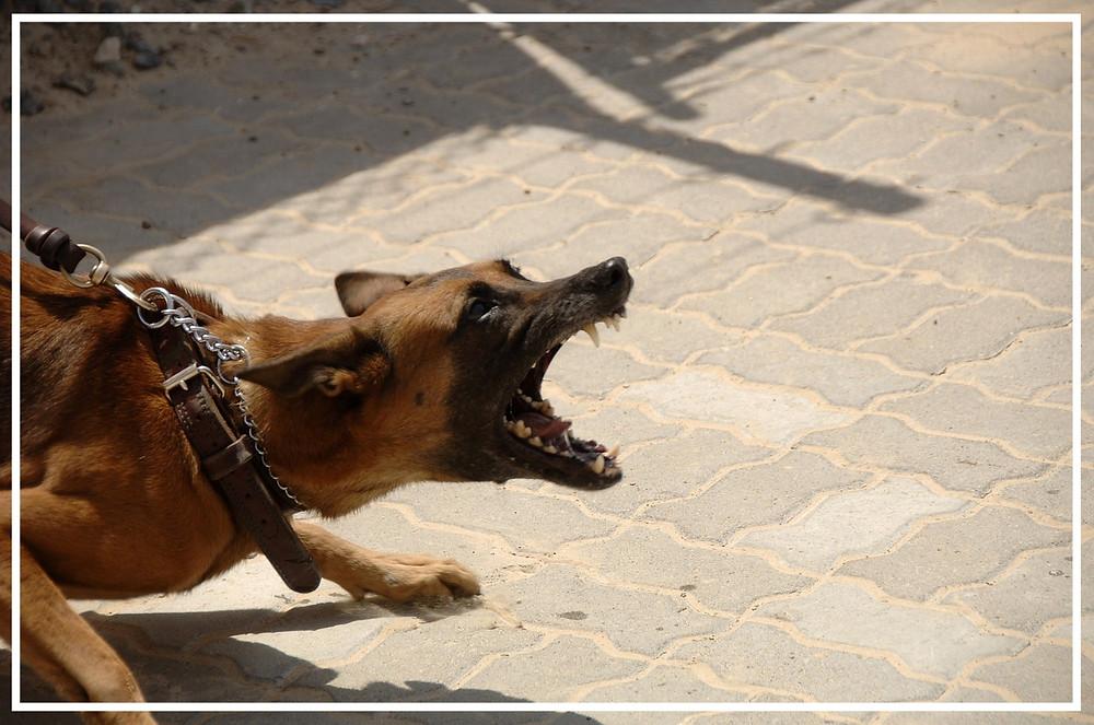 Leinenaggression bei Hunden