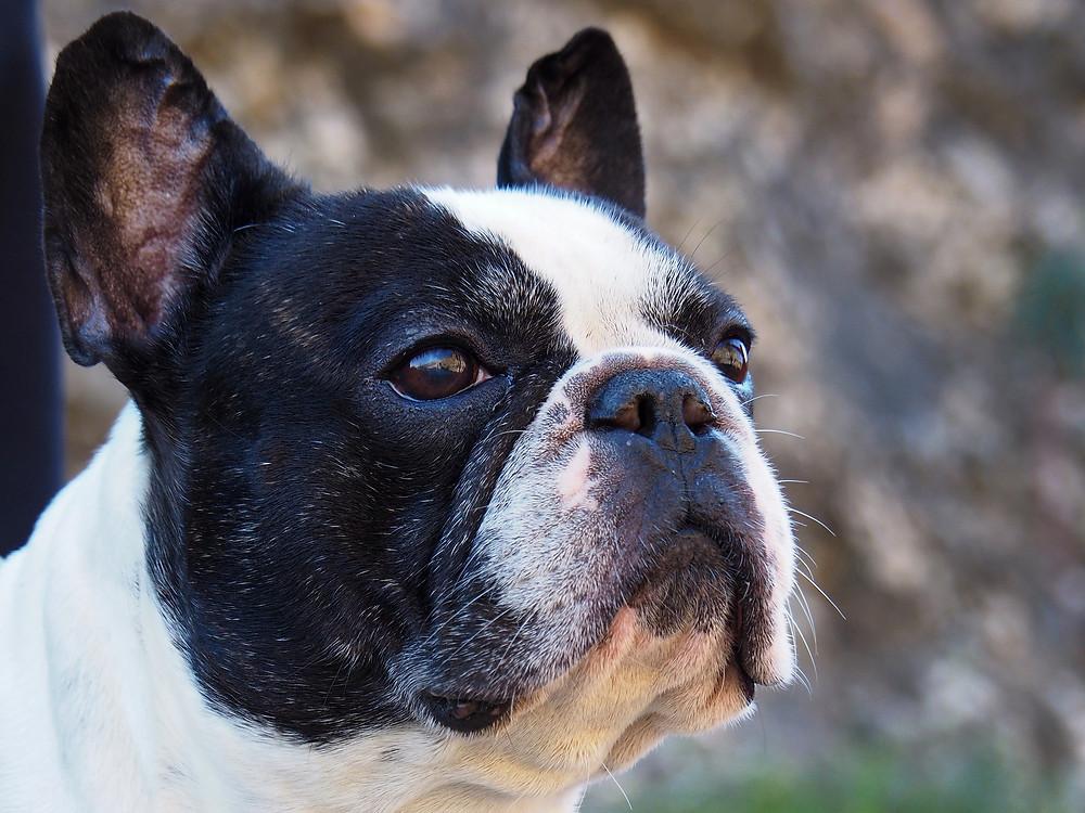 Körpersprache der Hunde V