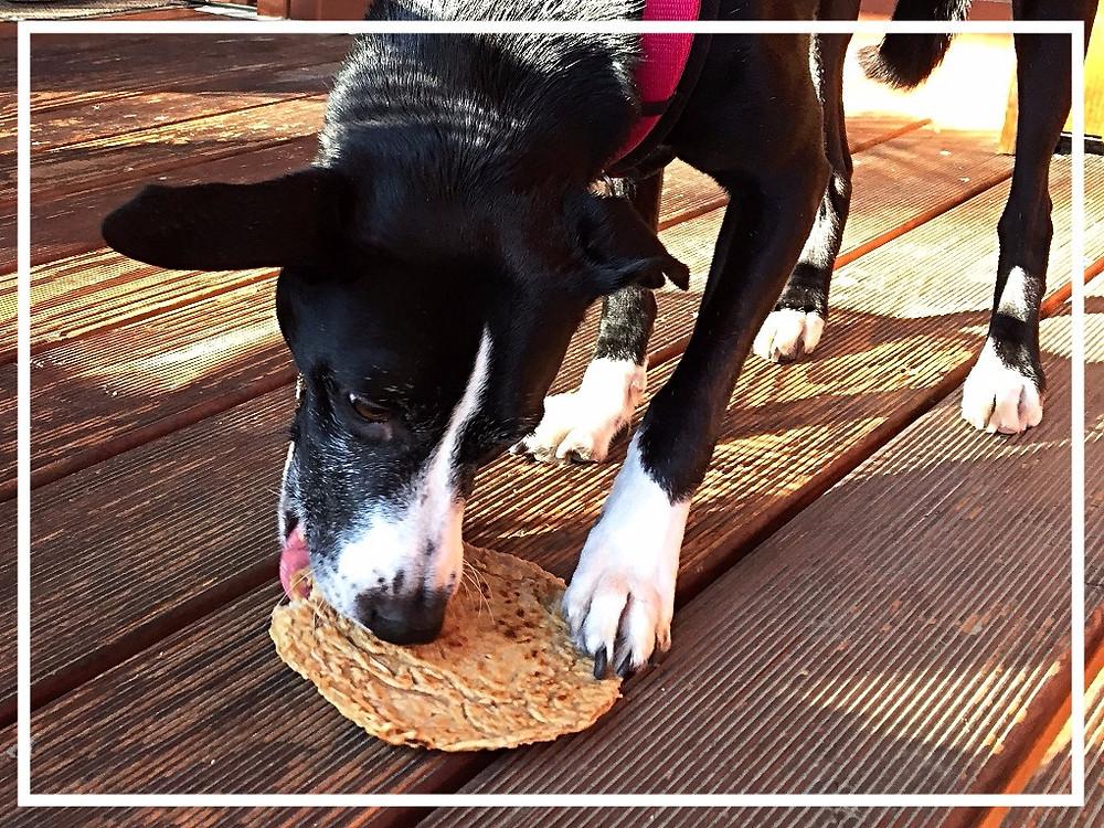 Hundegeburtstag II