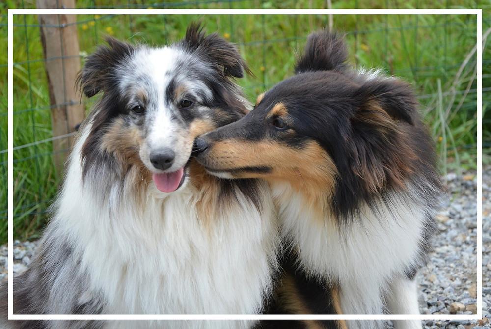 Körpersprache der Hunde I